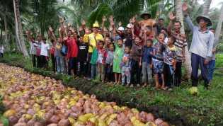 Bupati Inhil Yakini Program Penyelamatan Kebun Kelapa Rakyat Akan Berhasil Hingga Akhir Tahun