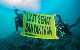 Kapal Rainbow Warrior Greenpeace Kunjungi Raja Ampat