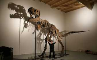 Imajinasi, Pendidikan dan Pengalaman Jumpa T.Rex Pertama Yang Tak Terlupakan
