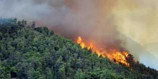 Polda Riau Menyelidiki Kebakaran Lahan Konsesi Dua Perusahaan di Rohul
