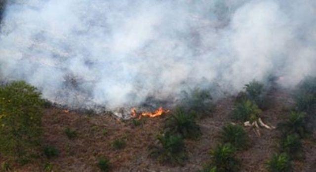 DPRD Riau Kantongi Enam Nama Perusahaan Pembakar Hutan dan Lahan di Riau