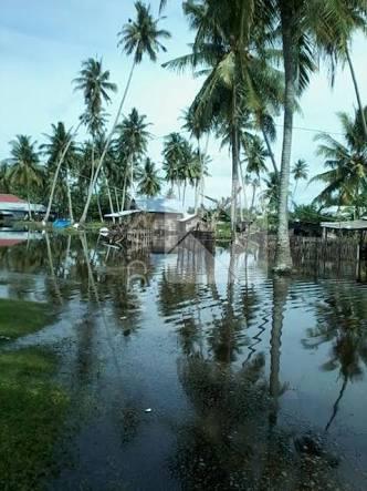 Air Sungai Meluap, Puluhan Hektare Lahan Perkebunan Kelapa Di Desa Tekulai Hilir Terendam Banjir